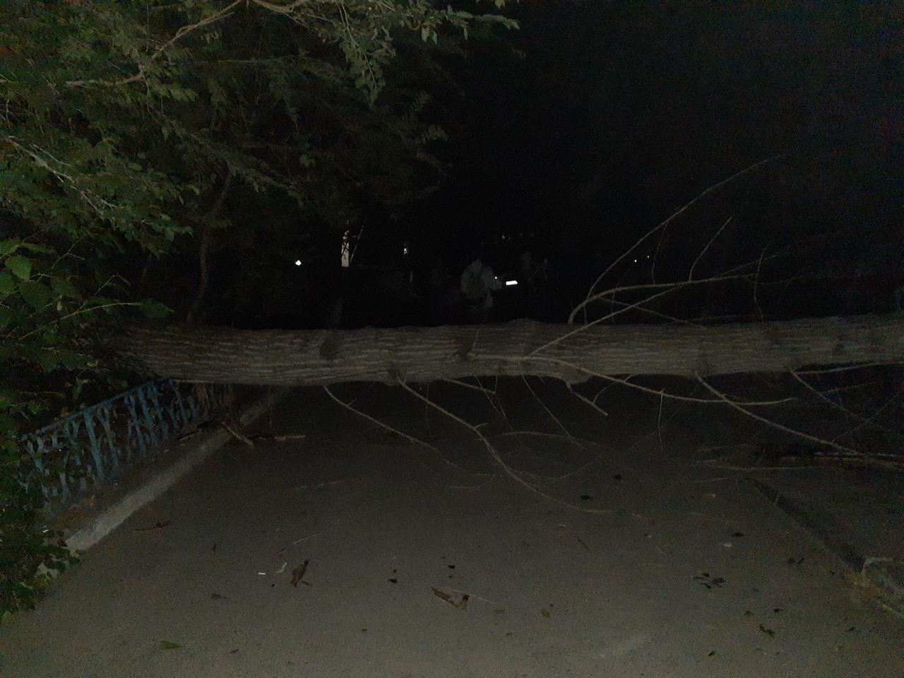 Картинки упавших деревьев